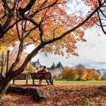 fall, park, bench